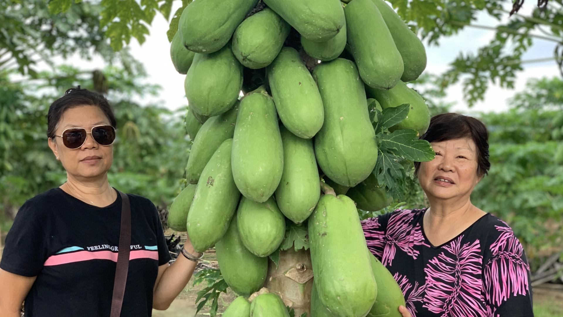 Fruits of Sabah Photos for Web Slider.015
